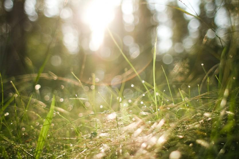 Grass for Cambridge copywriting post